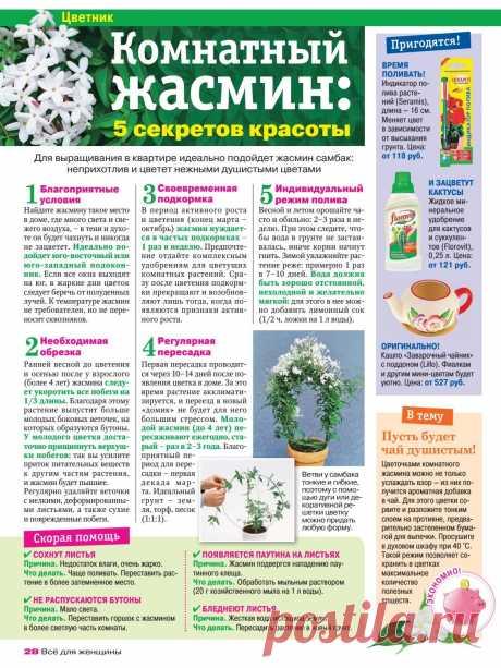 Room jasmine