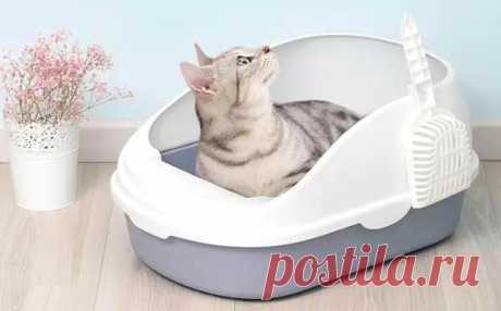Как приучить кошку к лотку - ЖЕНСКИЙ МИР - медиаплатформа МирТесен