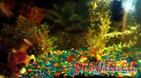 Сложно ли ухаживать за аквариумом?   Быково-медиа