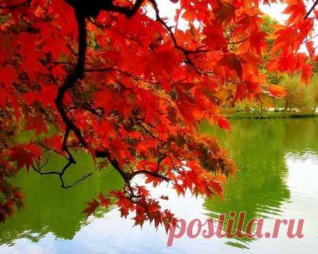 Осень – это сказка грусти и любви!.