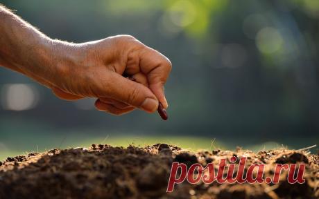 Что и когда сеять в огороде – народные приметы в помощь дачнику