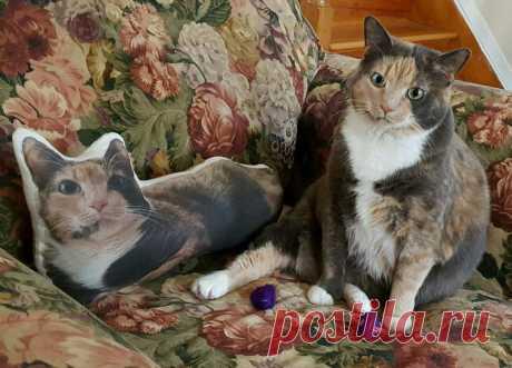 Эти очаровательные котики поднимут вам настроение!