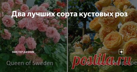 Два лучших сорта кустовых роз Кустовые розы не требуют повышенного внимания, хорошо растут в треугольных, квадратных, прямоугольных рабатках. Роза названа в честь королевы Швеции Кристины. Густо махровые бутоны источают какую-то холодную красоту. Лепестки окрашены в слабо-розовый цвет. Имеют правильную, аккуратную форму. Некрупного размера, до 8 см в окружности. Цветы всегда приподняты к небу, не теряют форму даже под
