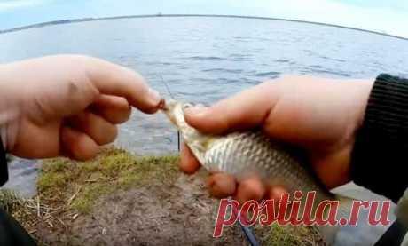 Когда начинают ловить весеннего карася - советы бывалых рыбаков Долгожданная рыбалка по открытой воде для многих рыболовов любителей начинается с весенней ловли карася. Карась рыба привередливая и особая, поймать достойного в это время года не совсем легкая задача…