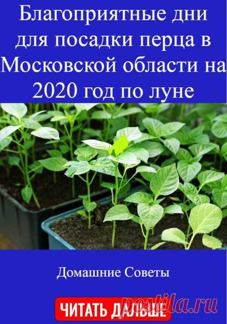 Благоприятные дни для посадки перца в Московской области на 2020 год по луне