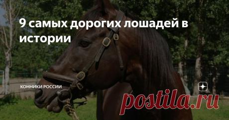 9 самых дорогих лошадей в истории Всегда ли их цена оказалась оправданной?