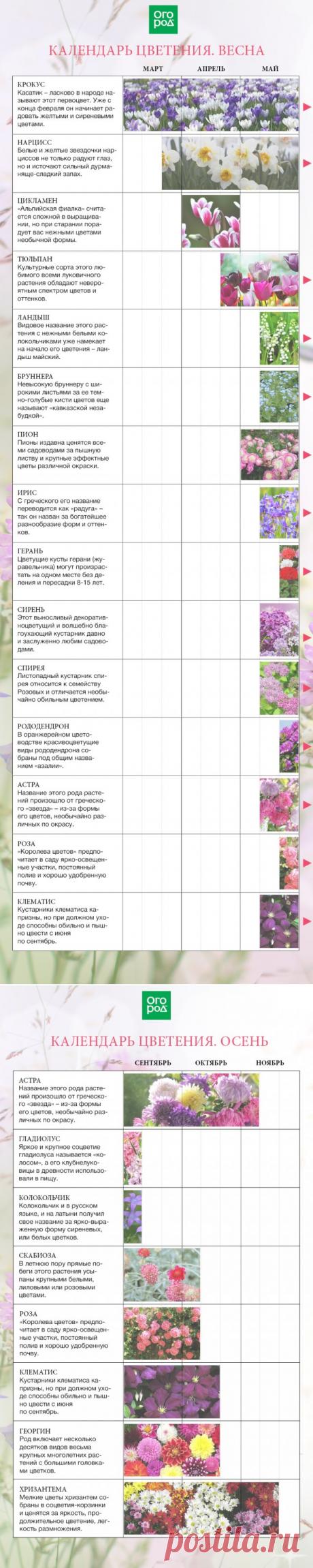 El calendario del florecimiento mnogoletnikov por meses desde la primavera hasta otoño