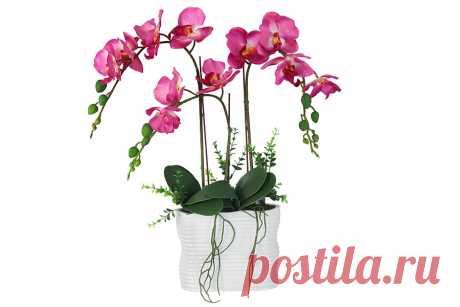 Как нарастить корни у орхидеи фаленопсис, оживление и реанимация корней Чтобы оживить орхидею филанопсис, следует нарастить ее корни, сделать это совсем не сложно, следуйте простым правилам и у вас все получится.