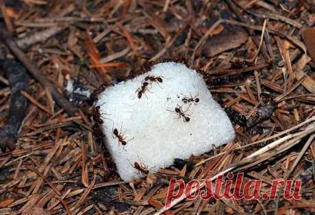 How to get rid of ants in a kitchen garden: national methods