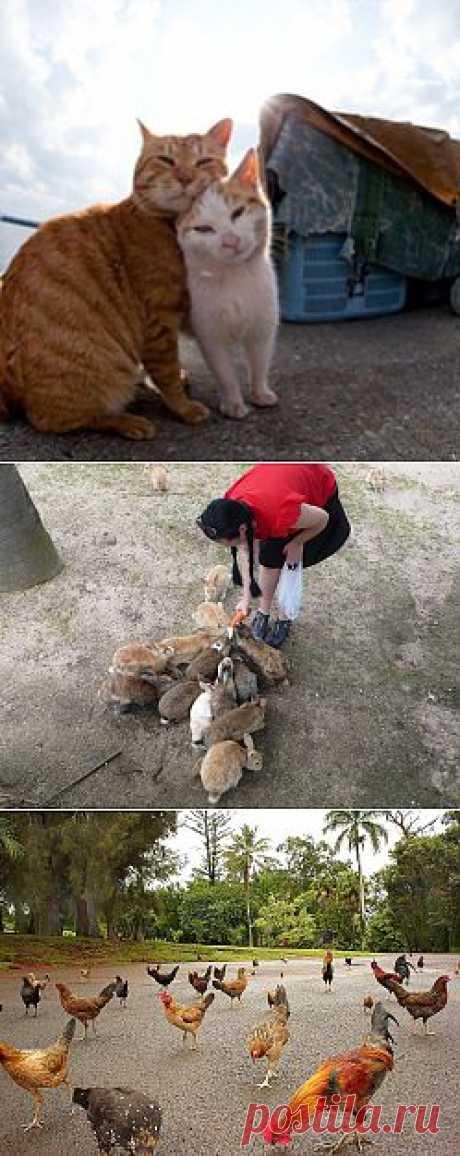 Остров кошек и другие острова, захваченные животными