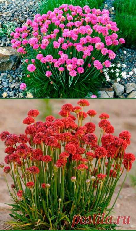 4 цветка, которые будут радовать вас на даче весь сезон   Мистер Дачник   Яндекс Дзен