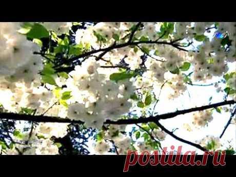 ▶ ♡ André Rieu - Nightingale Serenade