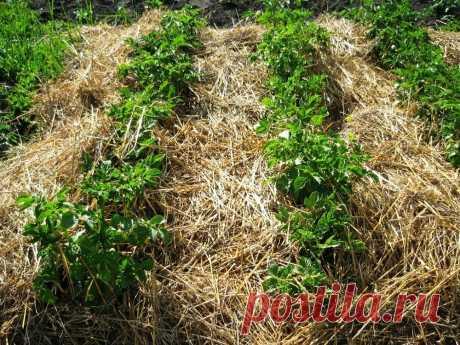 Как по «умному» бороться с сорняками? Три метода, проверенных миллионами дачников!   6 соток