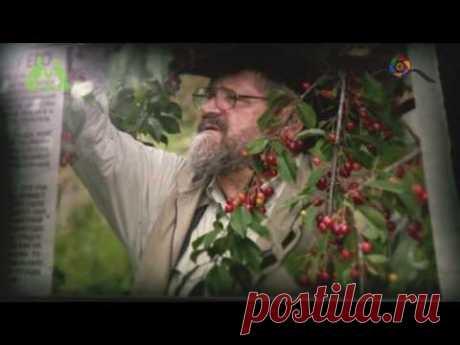 Грядка Хольцера (полная версия) / Sepp Holzer's Permaculture - YouTube