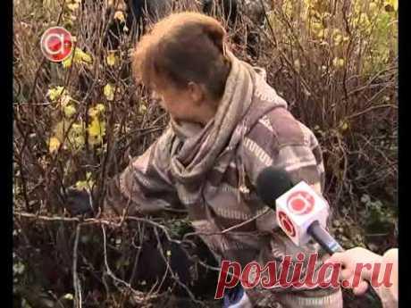 Обрезка смородины осенью для подготовки к зиме