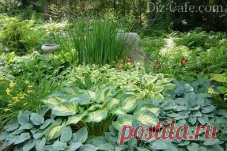 Что посадить на клумбе в тени - все тенелюбивые растения для клумбы