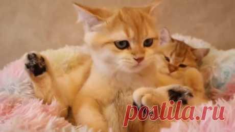 Котятки отдыхают! Какие же они милые...)