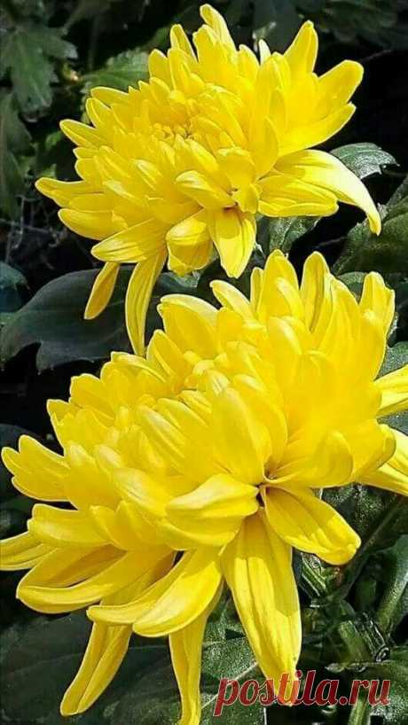 Любите желтые цветы