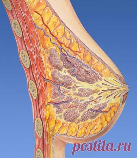 Молочная железа: первые признаки онкологии | ОкейДок | Яндекс Дзен