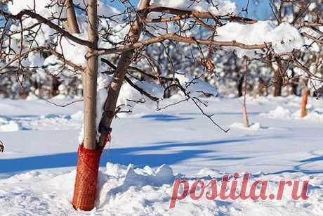Как уберечь деревья и кустарники от поломки после экстремального снегопада?       Отвечает опытный садовод Григорий Савельев: От налипшего снега чаще всего ломаются те деревья и кустарники, кроны которых сильнее других его задерживают. Прежде всего это все вечнозеленые растен…