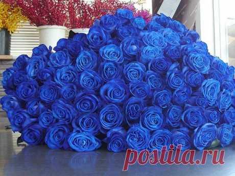 Букеты из синих роз — Чудеса