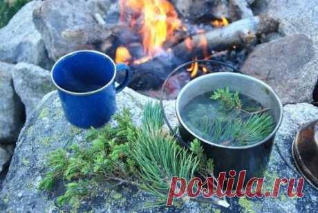 Походный чай.  Хвойные рецепты. Полезные здоровью витаминные таёжные чаи можно готовить из найденных в походе ингредиентов. Таежный чай. Таежный чай хорошо влияет на нервную систему. Его можно употреблять ежедневно. Состав чая: - тр...