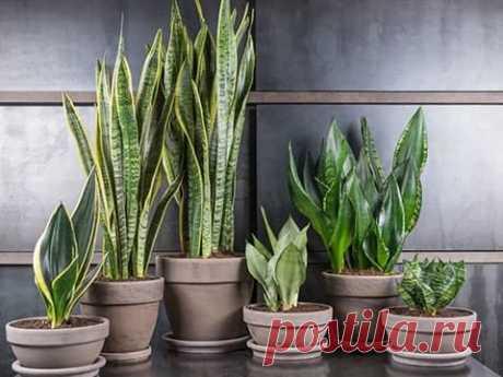 ТОП 10 самых полезных комнатных растений