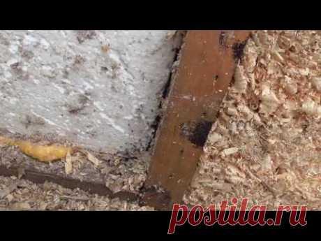 Вскрытие стен каркасника через 10 лет, пенопласт, минвата, стружка 🐁