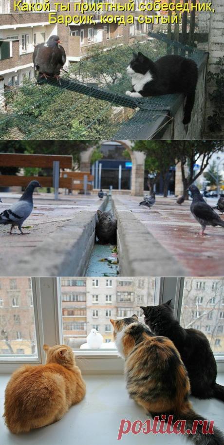 Котэ и голуби