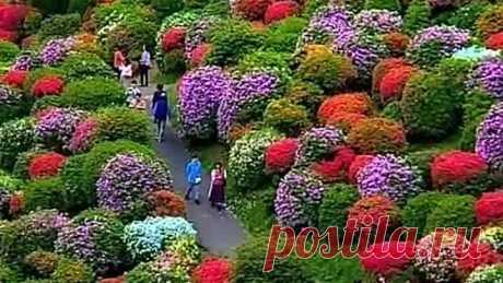 Невероятный сад в Японии