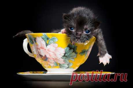 Котята обретают способность видеть в течение двух недель после рождения и питаются материнским молоком до двухмесячного возраста.