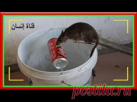 Лучшее решение для устранения мышей