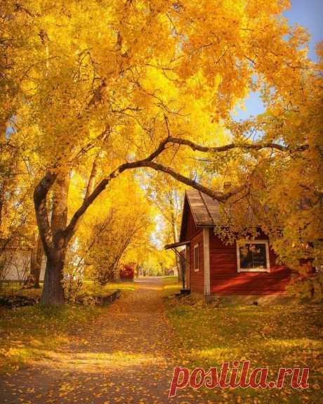 Золотые краски осени ...