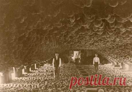 Где-то 100 лет назад самый прибыльный бизнес на островах Флорида-Кис выглядел вот так.