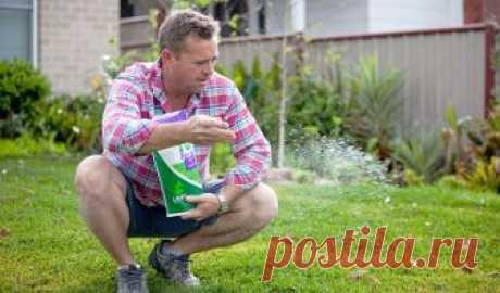 Кальциевая селитра: применение удобрения, подкормки