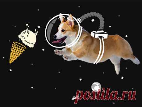 Восточный календарь: что нас ждет в2018 году Желтой Земляной Собаки