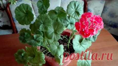 5 Комнатных растений, приносящих в дом Несчастья Я очень люблю разводить комнатные цветы. Стараюсь приобретать растения не только для украшения интерьера, но и для пользы, очищения воздуха, улучшения настроения.По своему опыту знаю, что некоторые цветы могут даже навредить хозяевам. Важно окружить свой дом растениями только с...