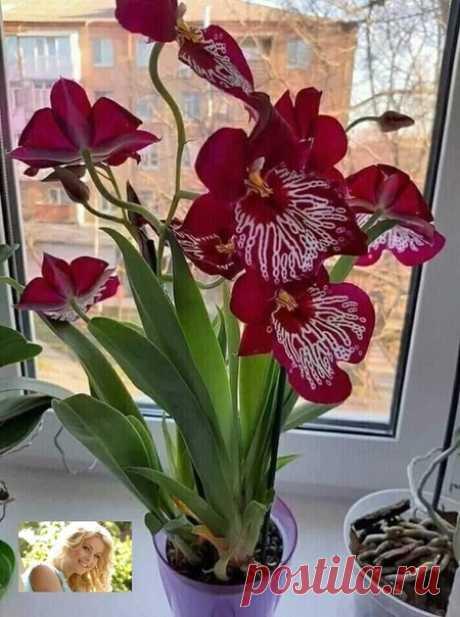 Какая красивая орхидейка! Делитесь фото своих красавиц!