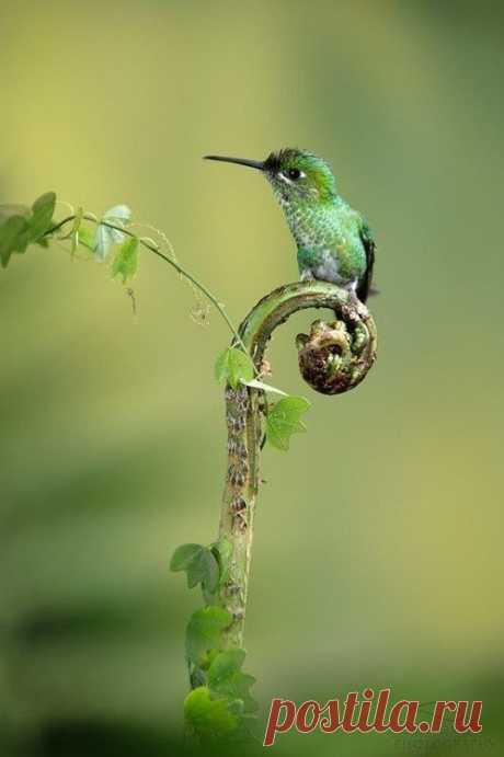 Small miracle - a humming-bird