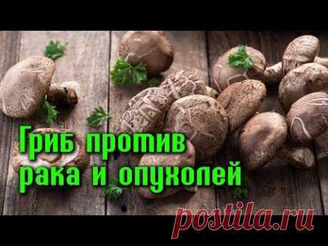 ГРИБ ШИИТАКЕ против РАКА, и ДОБРОКАЧЕСТВЕННЫХ ОПУХОЛЕЙ - YouTube