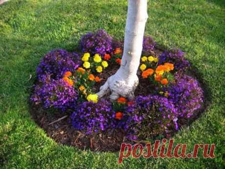 Как обустроить цветник под деревом в приствольных кругах