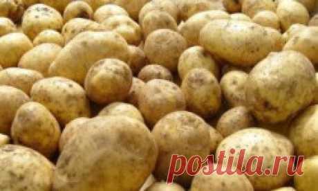 Лечение органов ЖКТ картофельным соком