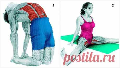 34 картинки о том, какие именно мышцы вы растягиваете во время разных упражнений Растяжки — неотъемлемая часть любых тренировок, потому что помогают поддерживать гибкость и подвижность суставов. Многие забывают растягиваться перед тренировками, потому что не знают о важности растя…