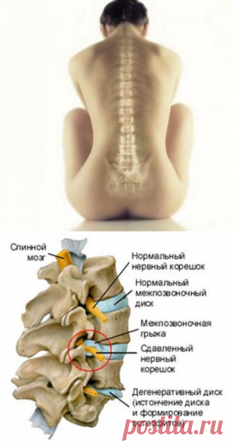 Мануальная терапия запись в Санкт Петербурге Калининский район