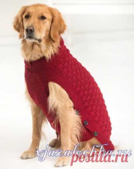 Свитер, вязание для собачек