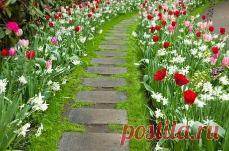 Идеи оформления клумб и цветников | Семейные будни. | Яндекс Дзен