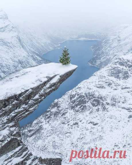Рождественская елка в Норвегии
