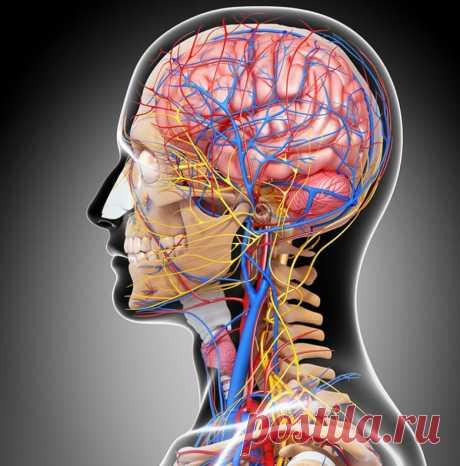 Как очистить сосуды головного мозга маслом чёрного тмина / Будьте здоровы