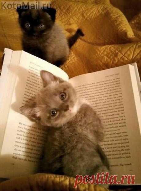 Хозяин, уже пора читать нам сказки на ночь