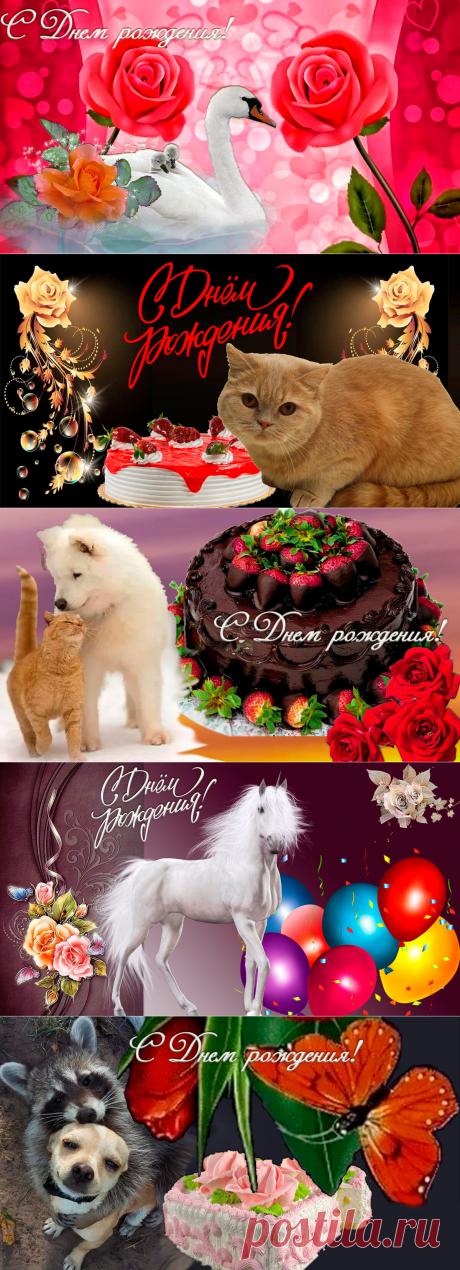 Скачать бесплатно открытки с Днём рождения | С Днем рождения | Яндекс Дзен